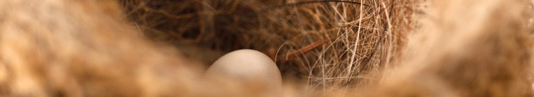 The Tangled Nest header image 2